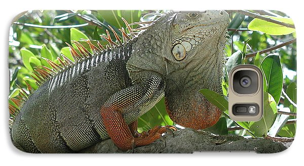 Galaxy Case featuring the photograph Iguana Daze by Nancy Taylor