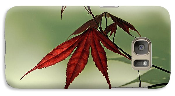 Galaxy Case featuring the photograph Japanese Maple Leaf by Ann Lauwers