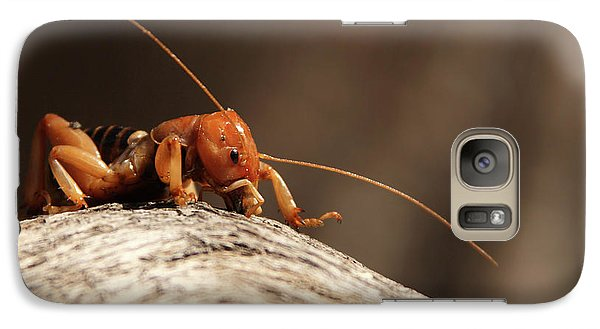 Galaxy Case featuring the photograph Jerusalem Cricket On Textured Log by Max Allen