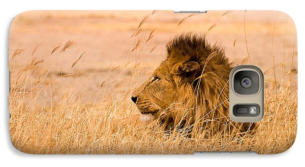 Animals Galaxy S7 Case - King Of The Pride by Adam Romanowicz