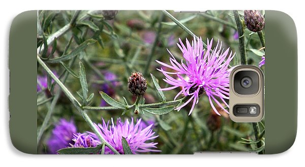 Galaxy Case featuring the photograph Knapweed by Danielle R T Haney