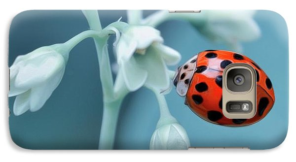 Galaxy Case featuring the photograph Ladybug by Mark Fuller