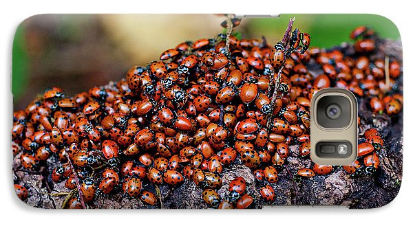 Ladybugs On Branch Galaxy S7 Case by Garry Gay