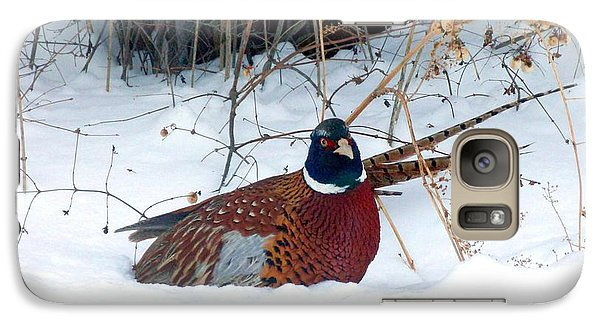 Galaxy Case featuring the photograph Lake Country Pheasant 2 by Will Borden
