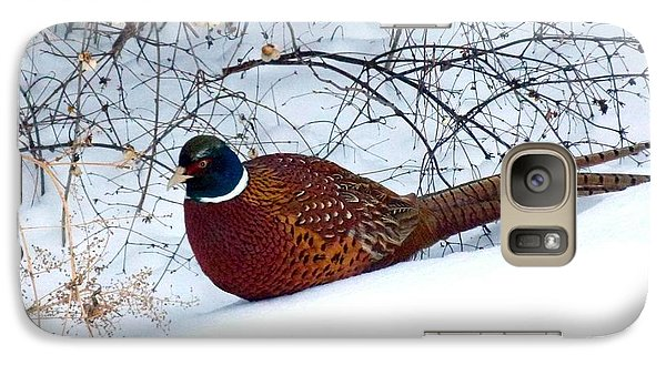 Galaxy Case featuring the photograph Lake Country Pheasant by Will Borden