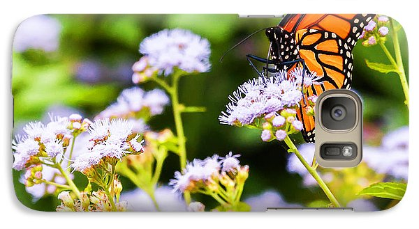 Galaxy Case featuring the photograph Late In The Season Butterfly by Edward Peterson