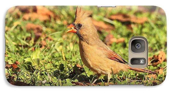 Leafy Cardinal Galaxy S7 Case