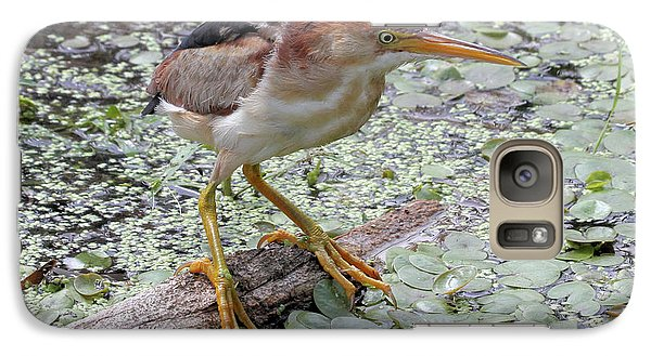 Galaxy Case featuring the photograph Least Bittern by Doris Potter