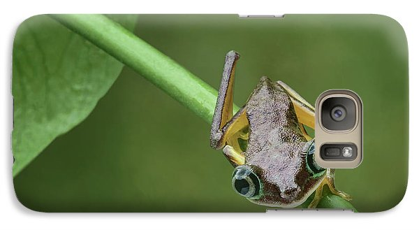 Galaxy Case featuring the photograph Lemur Tree Frog - 1 by Nikolyn McDonald