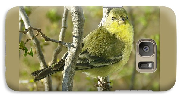 Lesser Goldfinch 1 Galaxy S7 Case