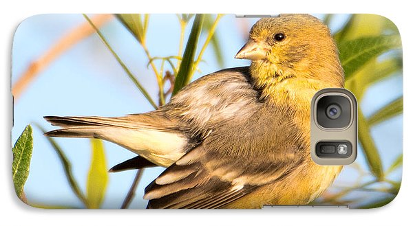 Galaxy Case featuring the photograph Lesser Goldfinch by Dan McManus
