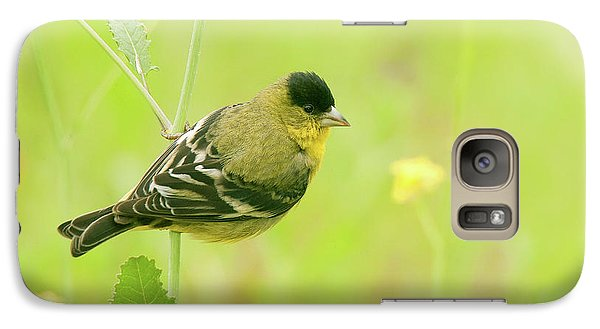 Galaxy Case featuring the photograph Lesser Goldfinch  by Ram Vasudev