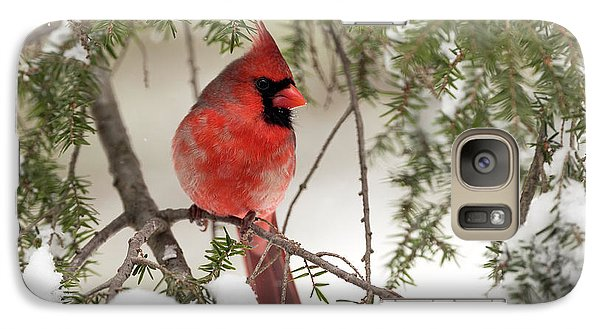 Galaxy Case featuring the photograph Leucistic Northern Cardinal by Everet Regal