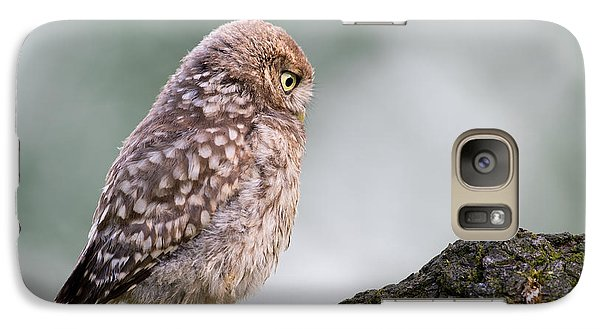 Little Owl Chick Practising Hunting Skills Galaxy S7 Case