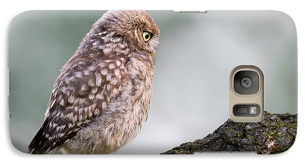 Little Owl Chick Practising Hunting Skills Galaxy S7 Case by Roeselien Raimond