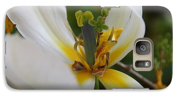 Galaxy Case featuring the photograph London White Tulip by Jolanta Anna Karolska