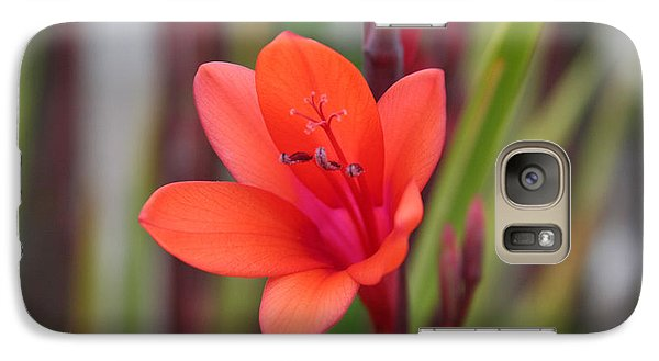 Galaxy Case featuring the photograph Lone Flower by Holly Ethan
