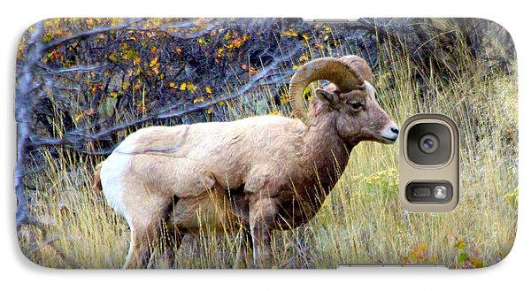 Galaxy Case featuring the photograph Long Horns Sheep by Irina Hays