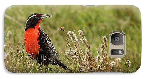 Long-tailed Meadowlark Galaxy S7 Case by Bruce J Robinson