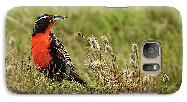 Long-tailed Meadowlark Galaxy S7 Case by Bruce J Robinson