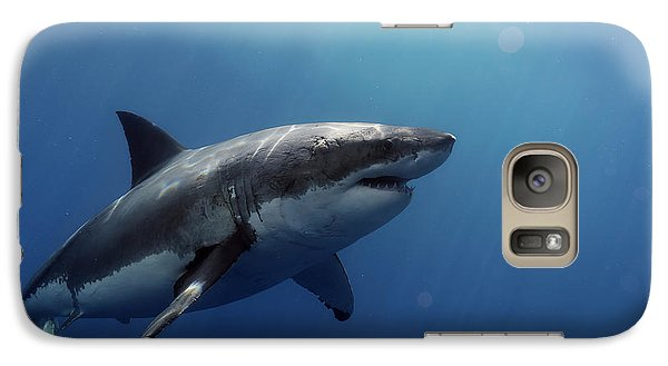 Lucy Posing At Isla Guadalupe Galaxy S7 Case by Shane Linke