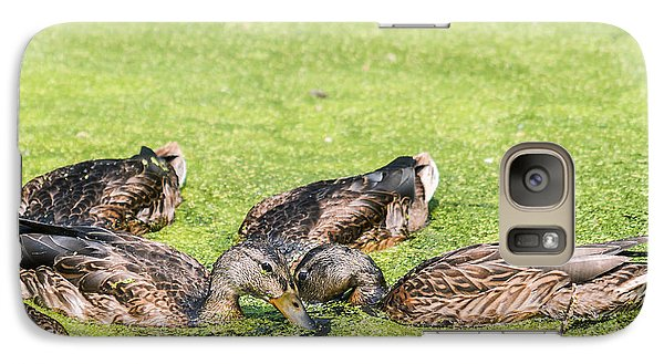Galaxy Case featuring the photograph Mallards Coming Up For Air by Edward Peterson