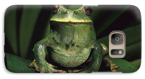 Marsupial Frog Gastrotheca Orophylax Galaxy S7 Case