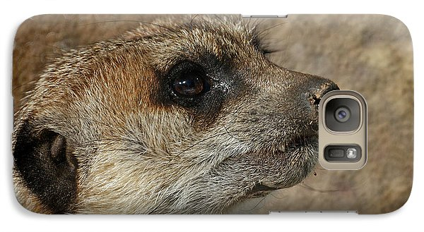 Meerkat 3 Galaxy S7 Case by Ernie Echols