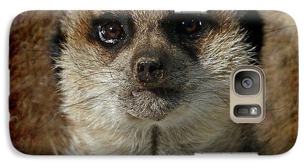 Meerkat 4 Galaxy S7 Case by Ernie Echols