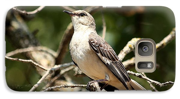 Galaxy Case featuring the photograph Mockingbird  by Sheila Brown