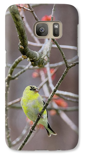 Galaxy Case featuring the photograph Molting Gold Finch by Bill Wakeley