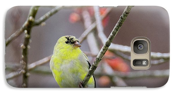 Galaxy Case featuring the photograph Molting Gold Finch Square by Bill Wakeley