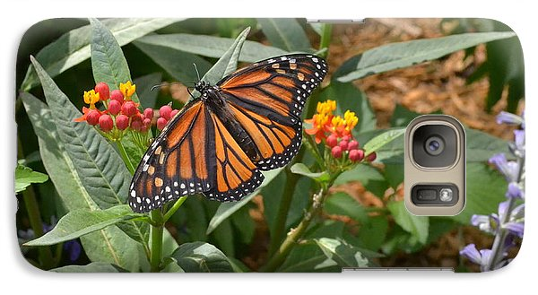 Galaxy Case featuring the photograph Monarch Butterfly by Carol  Bradley