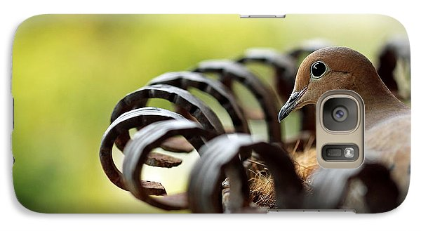 Galaxy Case featuring the photograph Mourning Dove In A Flower Planter by Debbie Oppermann