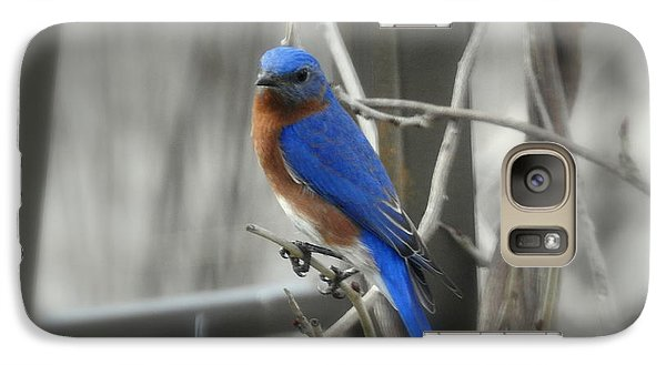 Galaxy Case featuring the photograph Mr. Bluebird by Brenda Bostic