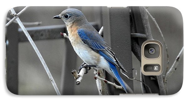 Galaxy Case featuring the photograph Mrs. Bluebird by Brenda Bostic