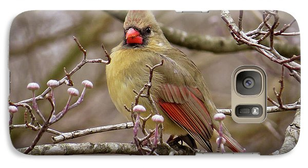Galaxy Case featuring the photograph Mrs Cardinal by Douglas Stucky