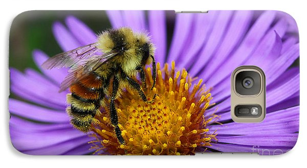 Galaxy Case featuring the photograph New England Aster And Bee by Steve Augustin