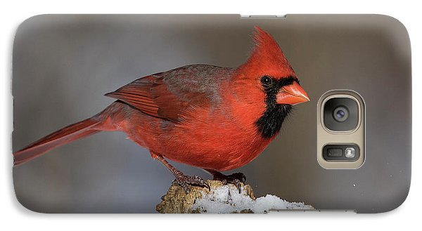 Galaxy Case featuring the photograph Northern Cardinal In Winter by Mircea Costina Photography