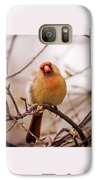 Galaxy Case featuring the photograph Northern Female Cardinal Pose by Terry DeLuco