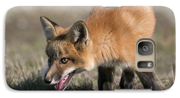 Galaxy Case featuring the photograph On The Prowl by Elvira Butler