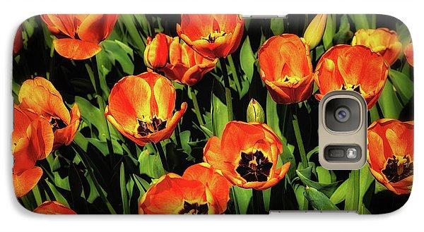 Tulip Galaxy S7 Case - Open Wide - Tulips On Display by Tom Mc Nemar