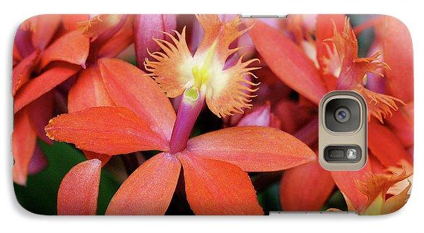 Orange Pink Epidendrum Orchid Galaxy S7 Case