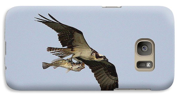 Galaxy Case featuring the photograph Osprey Catches A Fish by Barbara Bowen