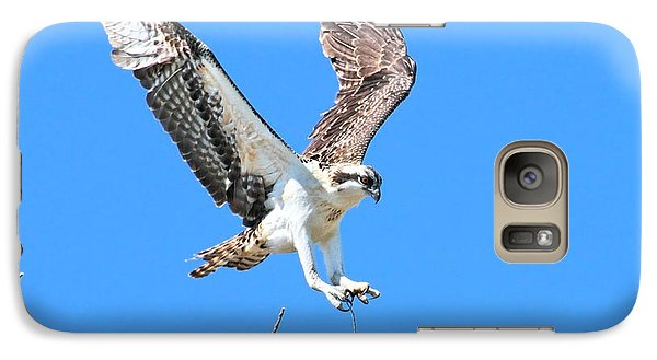 Ospreys Learning To Fly Galaxy S7 Case