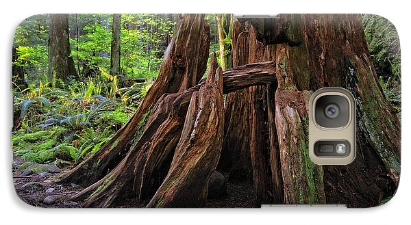 Galaxy Case featuring the photograph Pacific Rainforest Old And New by Charline Xia