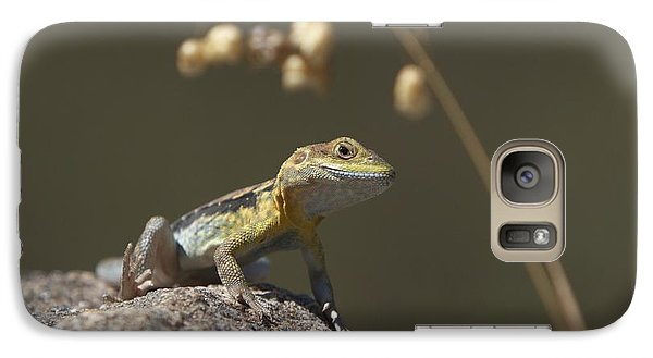 Galaxy Case featuring the photograph Painted Dragon by Bill Robinson