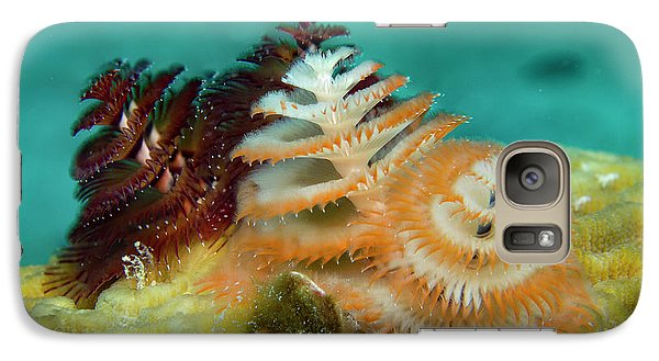 Galaxy Case featuring the photograph Pair Of Christmas Tree Worms by Jean Noren