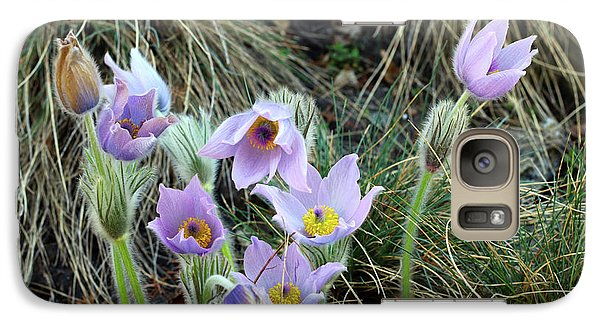 Galaxy Case featuring the photograph Pasqueflower by Michal Boubin