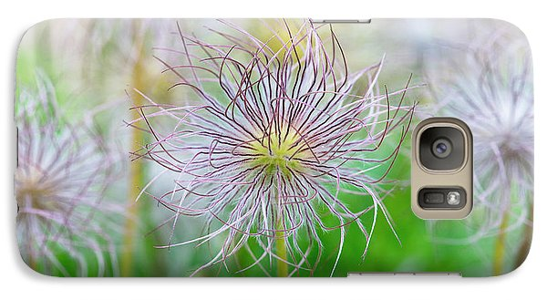 Galaxy Case featuring the photograph  Pasqueflower Seed Heads by Tim Gainey